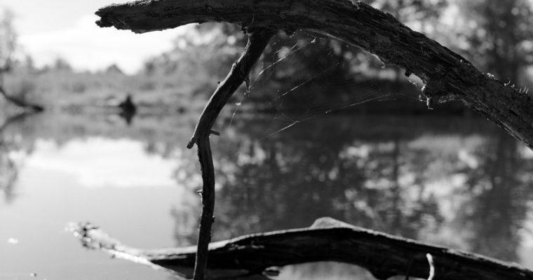 Pond-ering