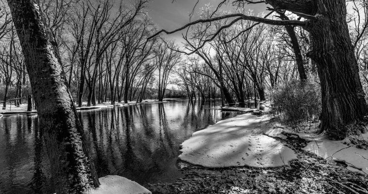 Frozen Forest along the Fox